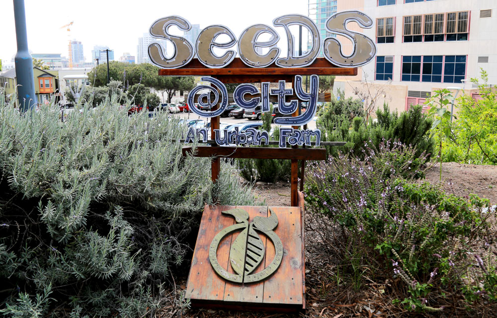 A Seeds at City sign in the urban farm at City College