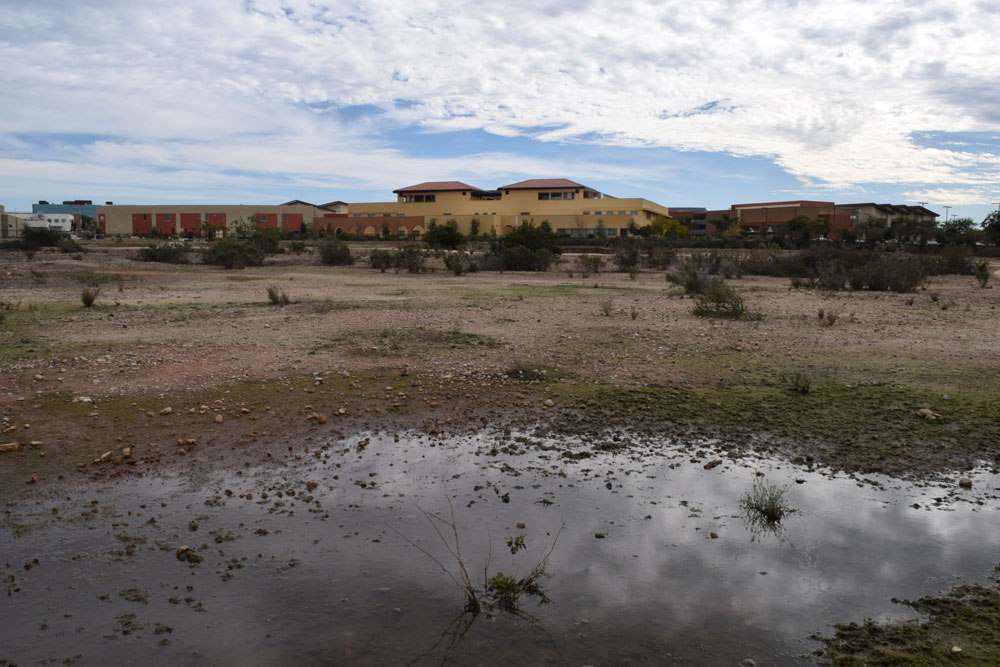 Vernal Pools and Trails at San Diego Miramar College