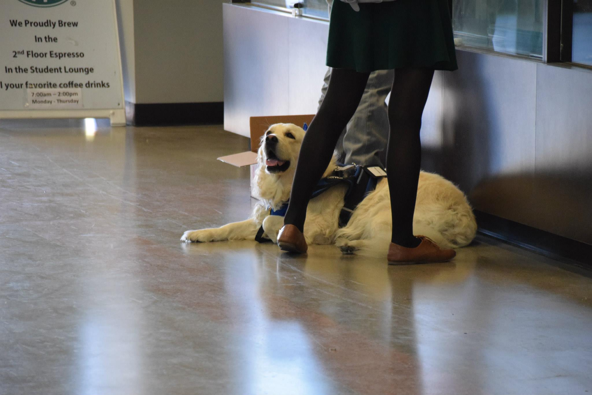 An assistance dog at San Diego Miramar College