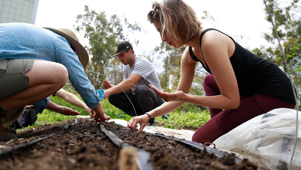 Students plant seeds at the farm at City College